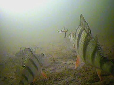 поклевка щуки на жерлицу подводная съемка