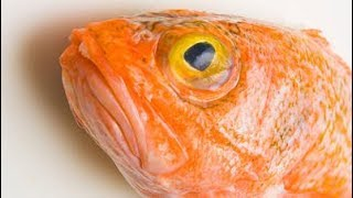 Machali (Fish) ki Zuban kion nahi hoti? Islam in Urdu dua e khair  Wazaif