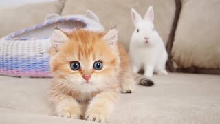 Kittens walk with a cute white bunny