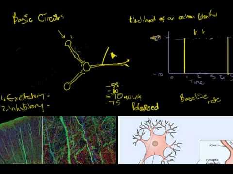 13 Basic Neural Circuits