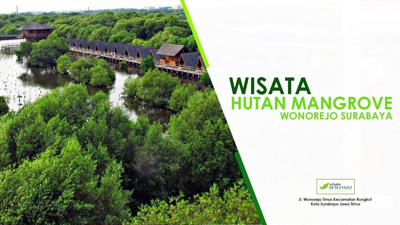 Eco Wisata Hutan Mangrove | Perumahan Wisata Semanggi Surabaya - YouTube