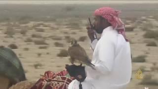 هذا الصباح- بطولة القلايل للمقناص في قطر
