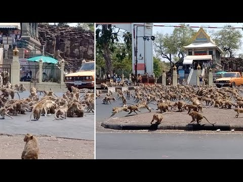 Дикие животные приходят в города. Природа отдыхает от деятельности человека