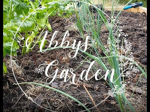 Companion planting: Celeriac and Leeks (April 2019, Zone 3 ... Leek Companion Plants