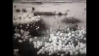 Животный мир американского севера - Школфильм (1973г.)