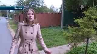 Владелица 30 собак довела до безумия соседей в Москве