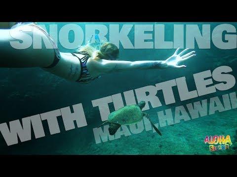 Snorkeling With Turtles : Maui, Hawaii