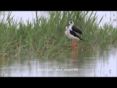 Landscape and Birding Impressions in Lake Neusiedl National Park