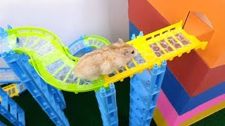My Funny Pet Hamster in Track Maze - Obstacle Course for Hamster