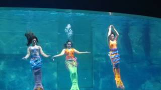 Atraksi Lumba-Lumba & Putri Duyung di Underwater Theatre, 12062016 (1/3) 8410