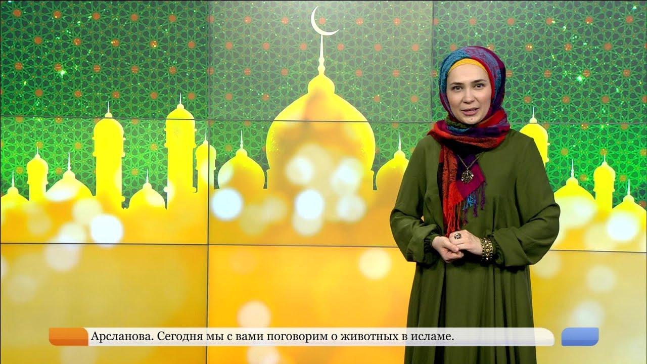 Ислам нуры - Животные в исламе - YouTube  Аминь В Исламе