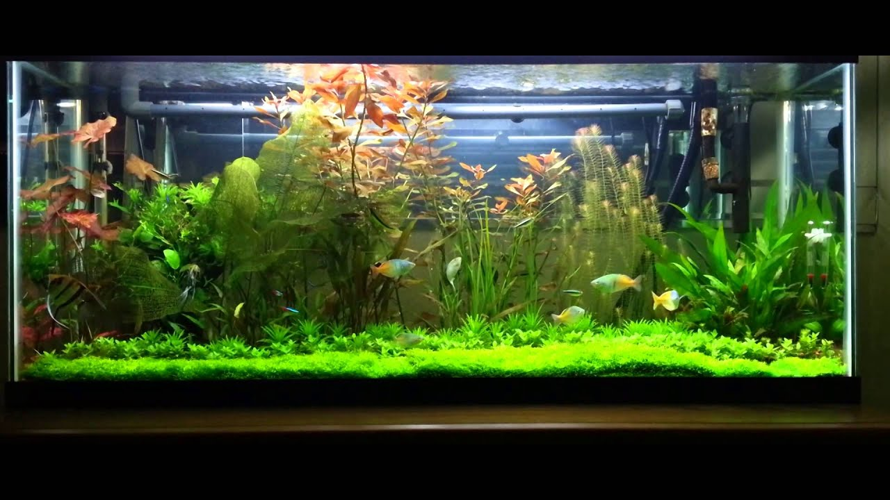 The amazing fish tank community youtube for Youtube fish tank