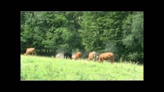 Le Boeuf Des Prairies Gaumaises, LA viande écologique