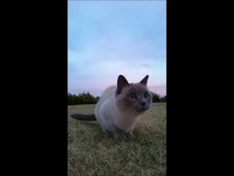Run Ella, Run! - PoathCats / PoathTV / Floppy Ragdoll Cats