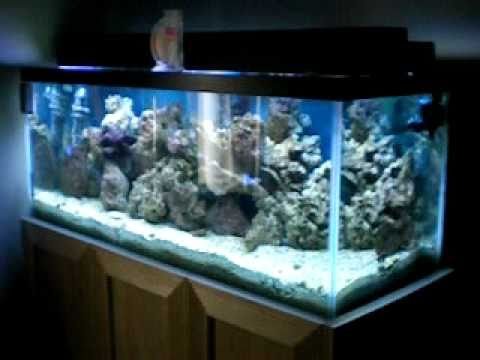 My 2 weeks old 75 gallon salt water aquarium and custom stand