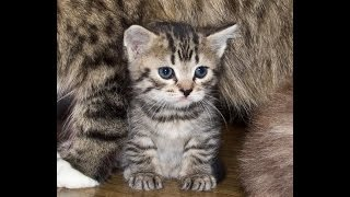 Милые котята!Играют,резвятся!Видео с кошками!Приколы!