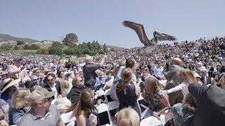 阿鼻叫喚!大学の卒業式に2羽のペリカンが乱入。映画ヒッチコックさながらの騒ぎに(アメリカ)