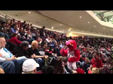 Guy Fights Benny The Bull