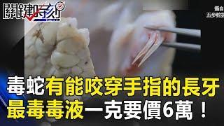 毒蛇有能咬穿手指的長牙 被拔掉也超致命?最毒毒液一克要價6萬! 關鍵時刻20180622-3陳耀寬