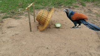 You Know This Trap? New Creative Unipue Bird Trap Using Wood & Hat