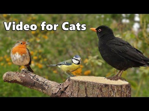 Cat TV : Garden Birds Galore ONE HOUR