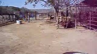 Wanna Be a Cowboy? Learn How to Rope Cows and Horses