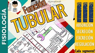 FUNCION TUBULAR RENAL, (Modificacion Tubular de la Orina) Completo..!!!