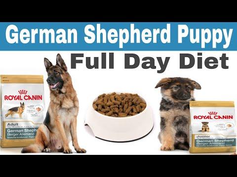 German Shepherd Puppy Full Day Diet Plan || German Shepherd dog full day diet plan