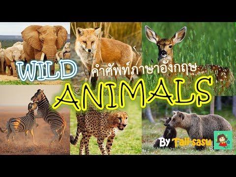 Wild Animals l สัตว์ป่า