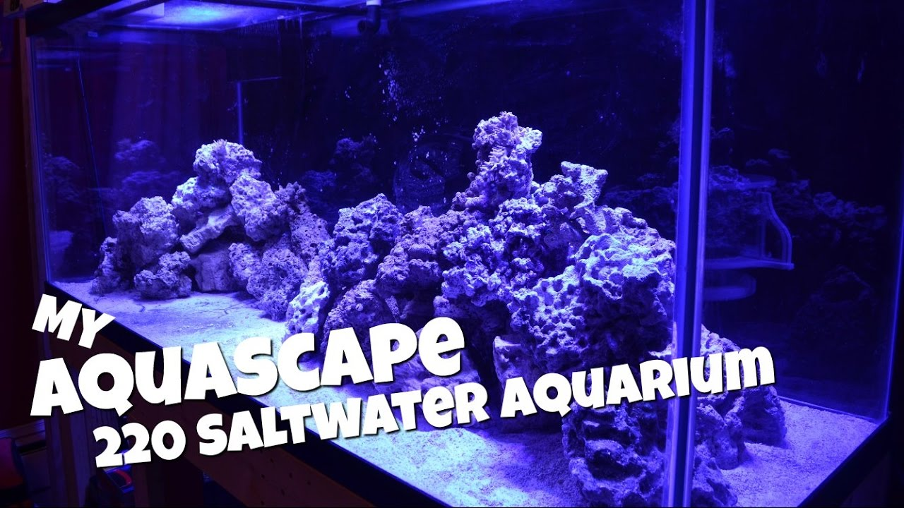 My Aquascape | 220 Gallon Saltwater Aquarium - YouTube