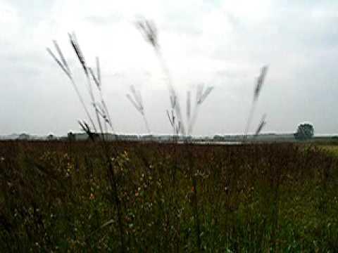 Big Bluestem on the tallgrass prairie
