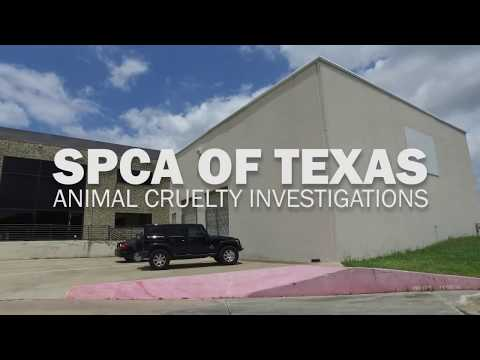 SPCA of Texas' Animal Cruelty Investigations Unit, Part One: Introduction