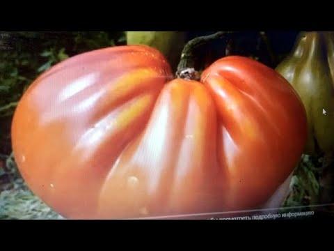 Нашла чудо томат - Царь трюфель!   грушеобразная   крупноплод   урожайный   томаты   форма   сорт