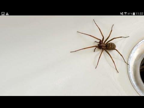 Une araignée dans ma salle de bain !