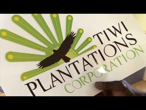Tiwi Plantations (2009)