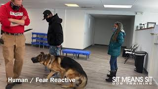 Consultation With Aggressive German Shepherd