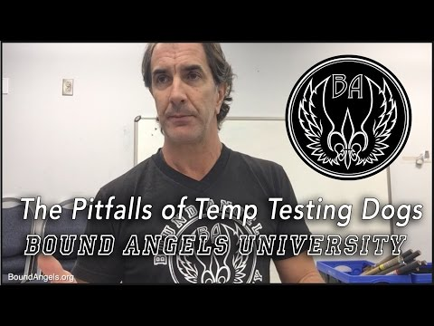 Pitfalls of Temp Testing Dogs - Bound Angels University Lecture 11-2016
