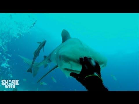 The Baddest Bumps   Shark Week's Most Intense Encounters