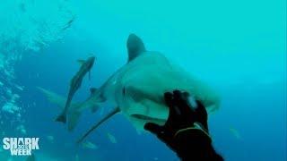 The Baddest Bumps | Shark Week's Most Intense Encounters