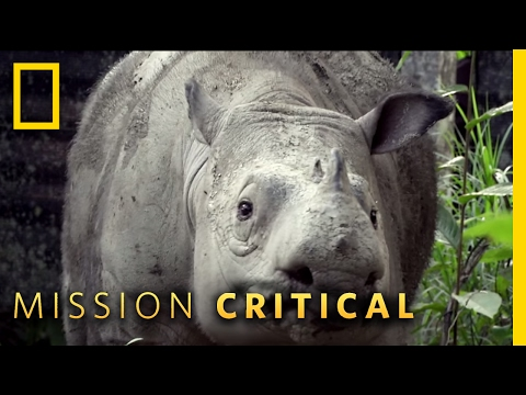 Supporting Puntong the Rhino | Mission Critical