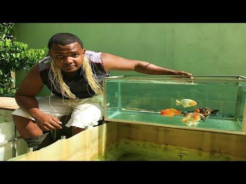 como reproducir goldfish ranchu