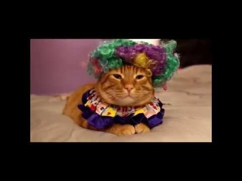 Cat in a Clown Costume