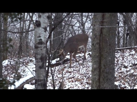 How To Hunt The Late Season For Deer