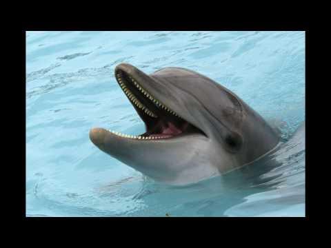Dolphin-Sound Effect