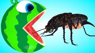 Pacman watermelon roll meets a black bug, whale animal friends as he find surprise toys on farm