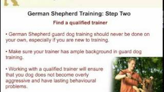 How To Train Your German Shepherd As A Guard Dog