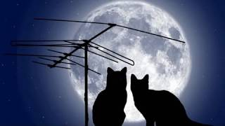 Ах,эта прекрасная кошачья жизнь.Ah, It's a Wonderful Cat Life.