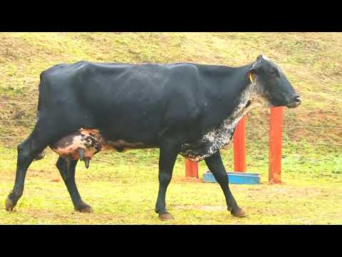 LOTE 65 PRLB1153