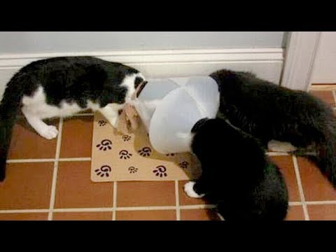 Please, try not to DIE FROM LAUGHING TOO HARD - Super FUNNY ANIMAL compilation