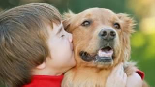 Как безвозмездна преданность собаки!